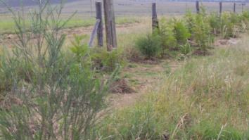 sample trees planted